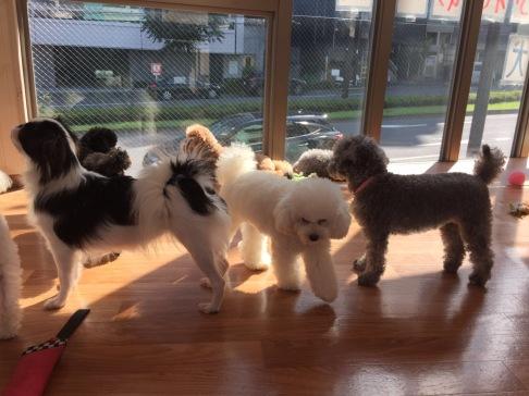 Dog Cafe 2
